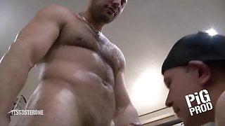machos cerdacos