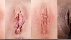Types of pussy