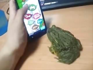 Video frog in pussy Yump frog green
