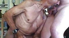 gaypig