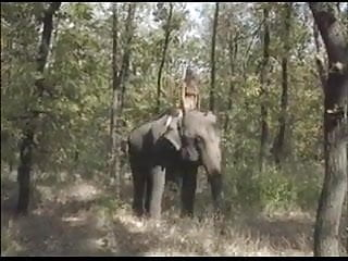 Characteristics of asian elephants - Selen: queen of the elephants