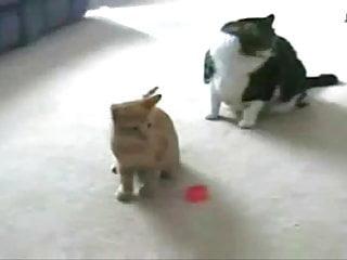 Vintage cat posters - Cat vs laser pointer