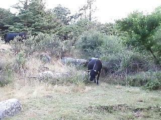 Benicio del toro sex scene Milf se folla a jovencito rodeado de toros miura