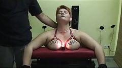 Tortury sikory