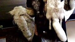 lots of furs and big cumload