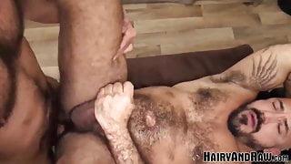 HAIRYANDRAW Hairy Teddy Torres And Alessio Romero Bareback