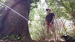 plan cul au bois