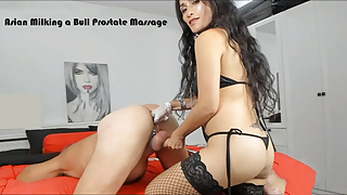 Asian Prostate Massage Milking a Bull
