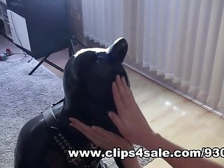 Determining sex in newborn puppies Rubber puppy play, hunter boot workship, anal, cum licking