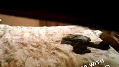 Hidden cam caught masturbating with dog in room