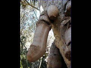 Funny gay cartoon - Funny tree shapes