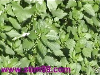 Sharp stinging in breast Heavy nettles self torture nipples pussy stinging nettle