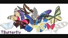 BBW TButterfly