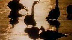 Homo Erectus, (full movie).mp4