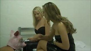 Humiliated Pig