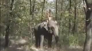 Queen of the Elephants