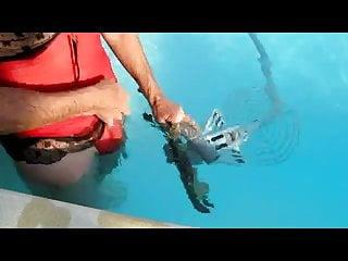 Videos of swimming pool sex Swimming pool robot1