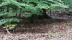 Odsłonięty w lesie publicznym