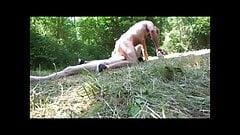 masturbation in the woods