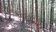 Im Wald ausgepackt
