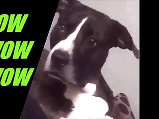 Latina doggiestyle clip Doggiestyle