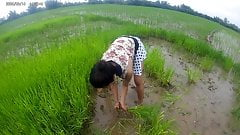 sexy asian girl in the rice field